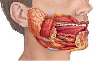 Выводной проток в зоне околоушной железы: значение, заболевания (паротит), лечение