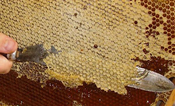 мед-забрус