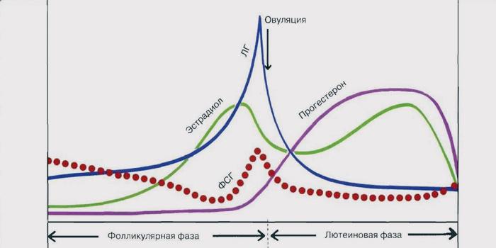 лютеинизирующий гормон