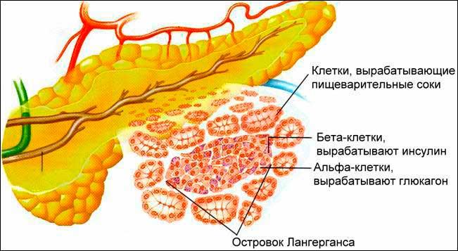сок поджелудочной железы содержит