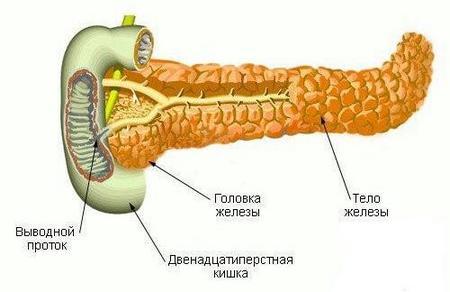 поджелудочная железа лечение народными средствами
