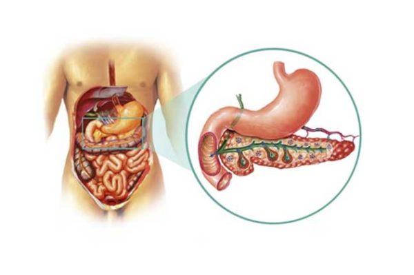 эхогенность поджелудочной железы повышена
