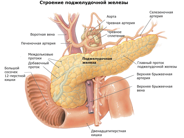 увеличена поджелудочная железа