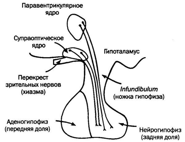 гипофиз головного мозга отклонения