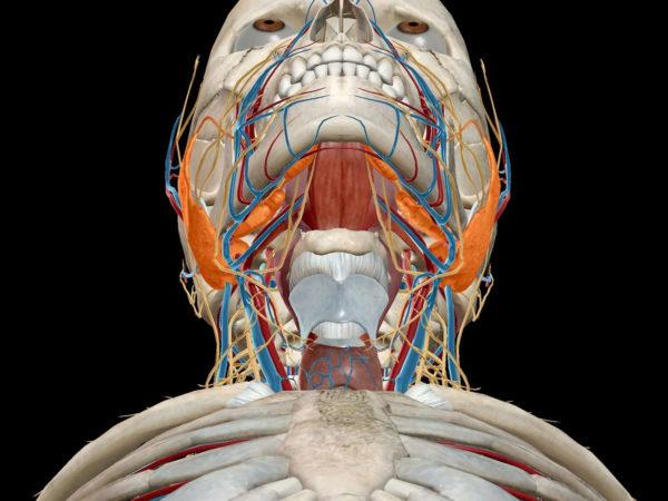 исследование слюнных желез