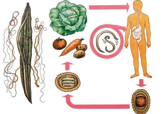 Паразиты в поджелудочной железе