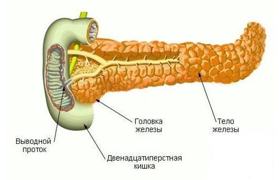 Размеры поджелудочной железы у детей