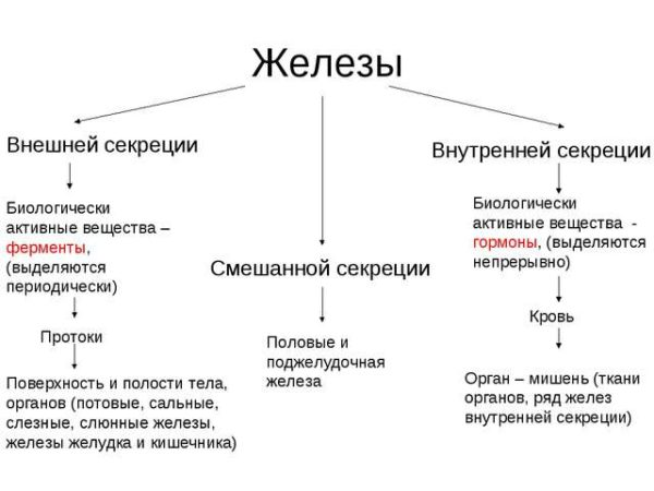 Железы смешанной секреции: таблица