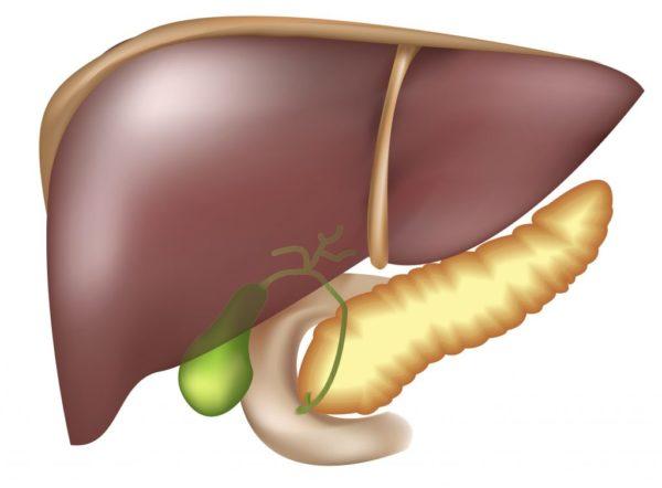Лечение печени и поджелудочной железы народными средствами
