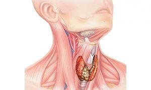 Паращитовидная железа: какие симптомы заболевания у женщин могут возникать при различных патологиях