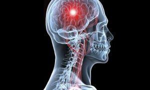 Биологические часы нашего организма — шишковидная железа