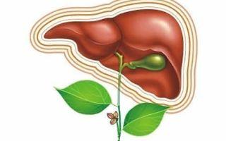 Применение народной медицины для лечения поджелудочной