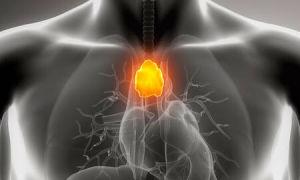 Вилочковая железа — важный орган иммунной системы, симптомы и лечение