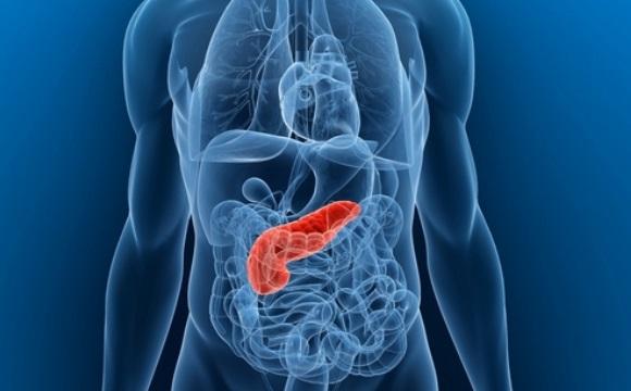 Укрепление поджелудочной железы