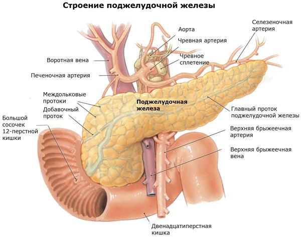 Поджелудочная железа симптомы