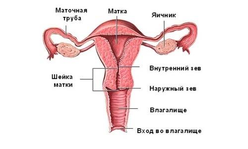 болит левый яичник