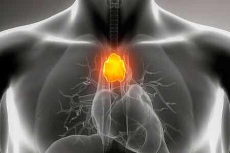 Вилочковая железа: где находится, фото, гистология и гормоны