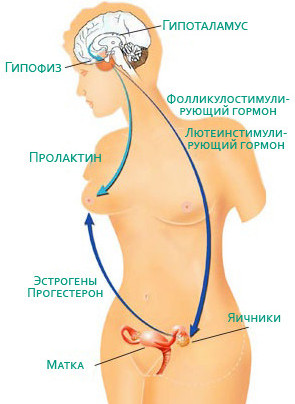 пролактин гормон что это такое
