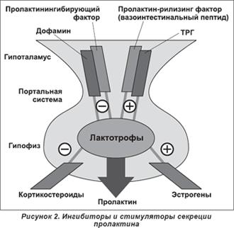 гиперпролактинемия что это