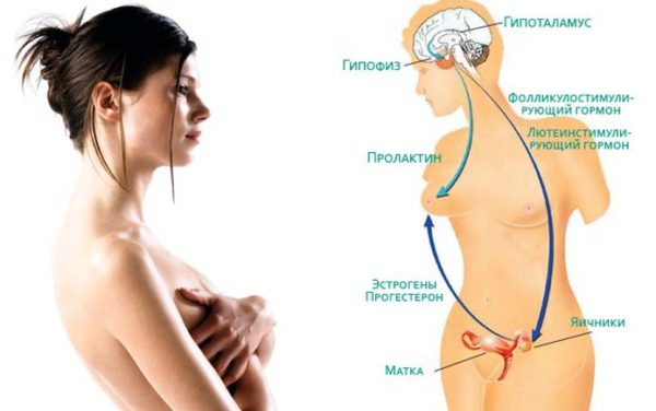 пролактин норма у женщин