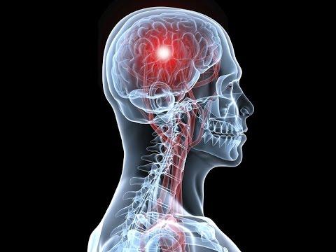 Шишковидная железа или эпифиз - что это такое и его роль в жизни человека