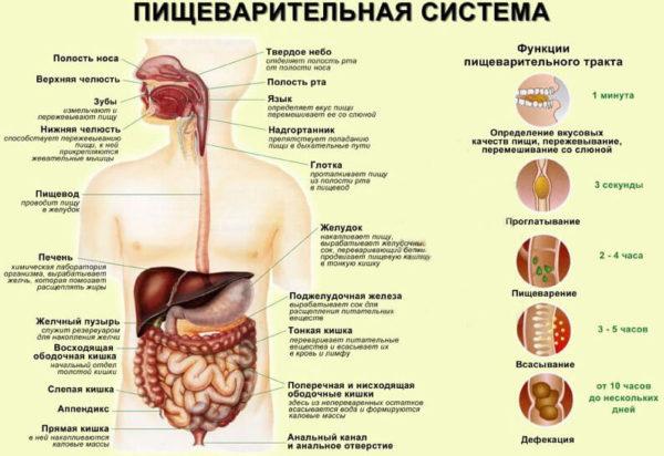 поджелудочная железа как болит