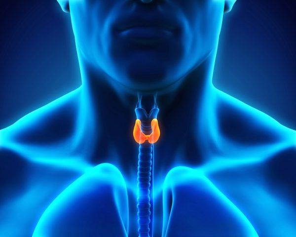 Как сдавать кровь на гормоны щитовидной железы: подготовка к анализу на ТТГ, расшифровка результатов