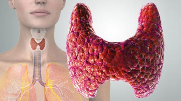 какие анализы нужно сдать на гормоны щитовидной железы