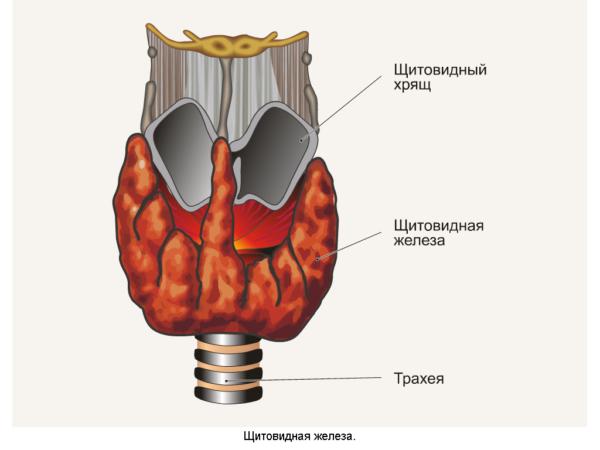 уменьшение щитовидной железы