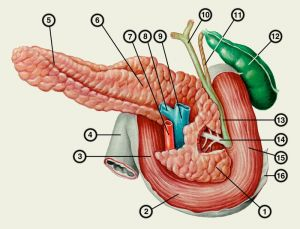 Гипоэхогенное образование в головке поджелудочной железы
