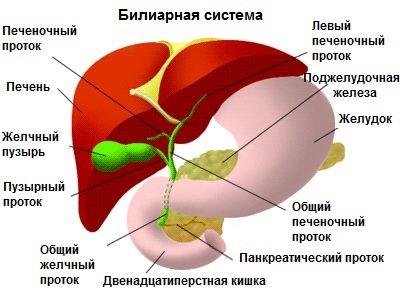 гепатоз поджелудочной железы