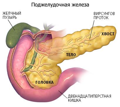 образование поджелудочной железы