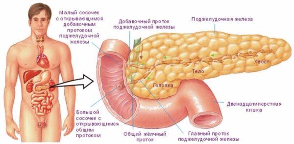Профилактика поджелудочной железы