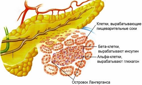 Панкреатические ферменты
