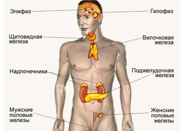 Железы внутренней, внешней и смешанной секреции